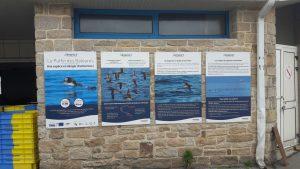 Une expo sur le puffin des baléares à la criée de Quiberon